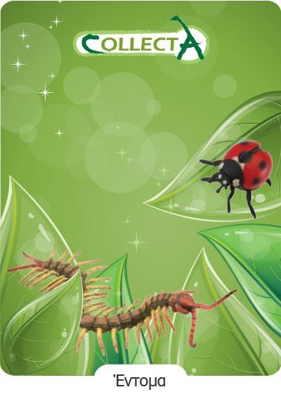 Έντομα Collecta