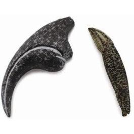 CollectA Εύρημα – Δόντι Και Νύχι Αλλόσαυρου Σε Κουτί (89288)