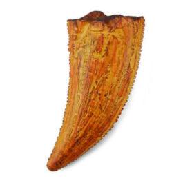 CollectA Εύρημα – Πλάγιο Δόντι Τυραννόσαυρου Ρέξ Σε Κουτί (89358)